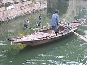 Kinesisk Mellanskarv som fiskefångare i Kina (Wikicommons)